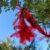 «Rouge verdoyant»